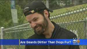 Study: Men's Beards Contain More Germs Than Dog's Fur [Video]