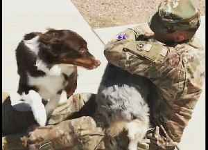 Dogs Welcoming Home Their Owners | Heart-Warming Compilation [Video]