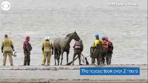 WEB EXTRA: Horse Rescue [Video]