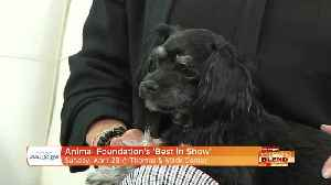 The Animal Foundation Presents 'Best In Show' [Video]