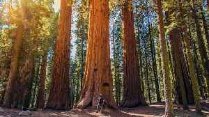 Escape to Nature: All U.S. National Parks Will Be Free to Visitors on April 20 [Video]