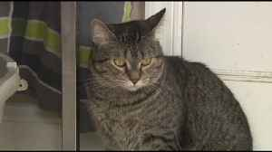 VIDEO This week's Furry Friends come from Feline Finish Line Rescue [Video]