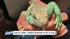 10-year-old son of man accused of throwing iguana wants his pet back [Video]