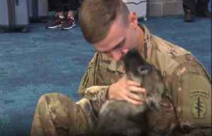 Soldier Reunited With Dog He Rescued in Syria [Video]