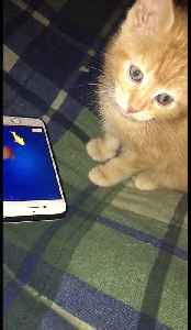 Cute little kitten plays video game for first time [Video]