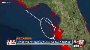 Conditions for devastating red tide bloom revealed [Video]