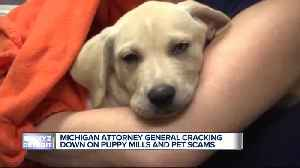 Michigan Attorney General's push to help consumers deceived in puppy scams [Video]