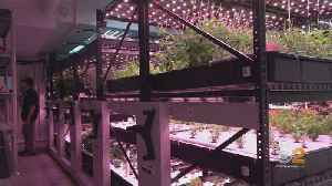 Basement To Table: New Farming Tech For NYC Eateries [Video]