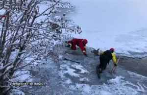 Firefighters pull deer out of icy lake in US [Video]