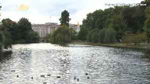 Planting At The Palace! The Royal Family Is Seeking A Full-Time Gardener Who Gets To Live At Buckingham Palace! [Video]