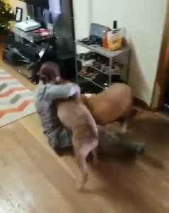 Soldier Reunites with Two Dogs After Five Months Apart [Video]