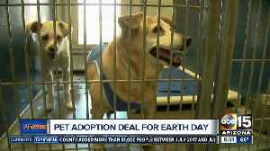 50% off pet adoptions this weekend [Video]