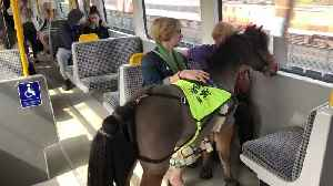 UK's First Ever Guide Horse Rides Newcastle Metro on Training Day [Video]