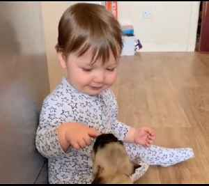 Baby and Pugs Play Together for the First Time [Video]