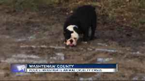 Help needed to identify people who dumped English bulldog, pet rabbits in Washtenaw county [Video]