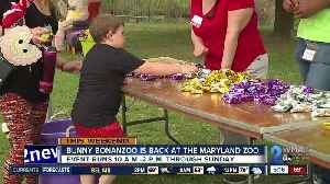 Bunny BonanZoo is back at the Maryland Zoo [Video]
