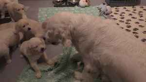 Mother Dog Teaches Her Puppies a Lesson in Patience [Video]