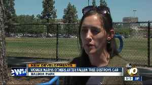 City denies woman's claim after tree falls on car in Balboa Park [Video]