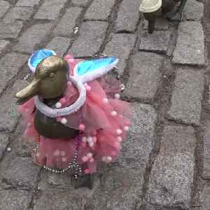 Public Garden ducklings dressed up in new outfits for Easter weekend [Video]