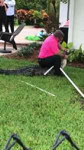 Trapper Takes out Huge Alligator From Swimming Pool [Video]