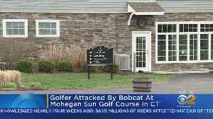 CT Golfer Attacked By Rabid Bobcat [Video]