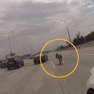 Police rescue donkey wandering highway in Chicago [Video]