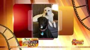 News video: Art's Cameras Plus Picture of the Day for 4/19!