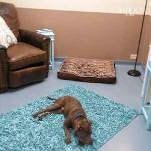 This shelter wants to make dogs feel