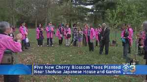 5 New Cherry Blossom Trees Planted Near Shofuso Japanese House And Garden [Video]