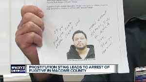 Prostitution sting leads to arrest of fugitive in Macomb County [Video]