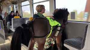 Miniature guide horse in training on Newcastle Metro [Video]