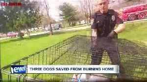 VIDEO: Deputies, firefighters rescue and revive 3 beloved family dogs from burning home [Video]