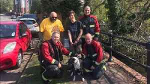 News video: Dog Named 'Jesus' Rescued From Lake On Good Friday
