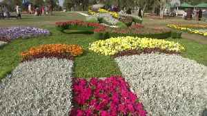 Flowers bloom at Baghdad's annual spring festival [Video]
