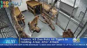 Tiger At Kansas Zoo Attacks Worker