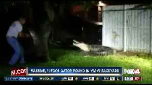 Alligator euthanized after breaking through Miami home fence [Video]