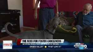 Fostering a shelter animal, an inside look [Video]