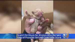 Search Intensifies For Woman Who Threw Bag Of Puppies Into Trash [Video]