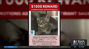 Search For Suspected Cat-Napper [Video]