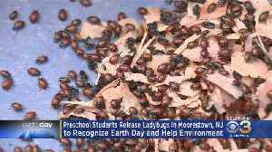 Preschool Students In New Jersey Release Ladybugs To Recognize Earth Day, Help Environment [Video]