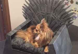 News video: Couple Create Game of Thrones-Themed Bed for Their Dog