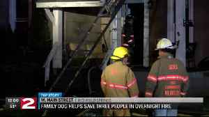 Family dog helps save three after overnight fire in Richfield Springs [Video]