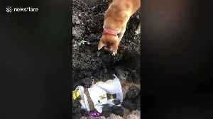 Heartbreaking moment pet dog tries to wake up her dead friend [Video]