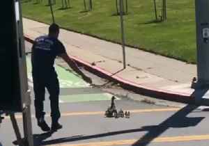 California Firefighter Assists Mother Duck and Ducklings Across San Jose Road [Video]