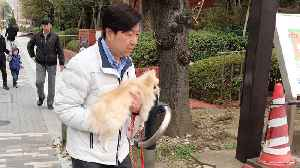 Pet Owner Carries Lazy Puppy [Video]