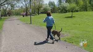 Dog Licenses And Vaccination Checks Being Conducted [Video]