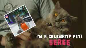I'm a Celebrity Pet! Serge the cat needs people and fame [Video]