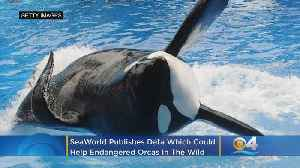 SeaWorld Publishes Data Which Could Help Endangered Orcas In The Wild [Video]