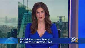 Rabid Racoon Found In South Brunswick [Video]