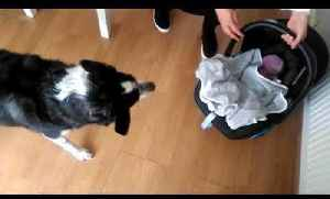 Dog Excited to Meet Owner's Newborn Baby for the First Time [Video]